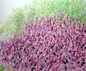 Cherry Blossom New York by NancyvandenBoom