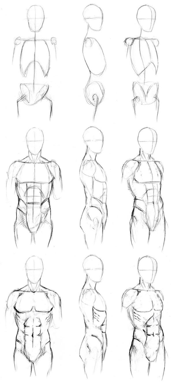 Basic male torso tutorial by timflanagan on deviantart for How to draw a body tumblr