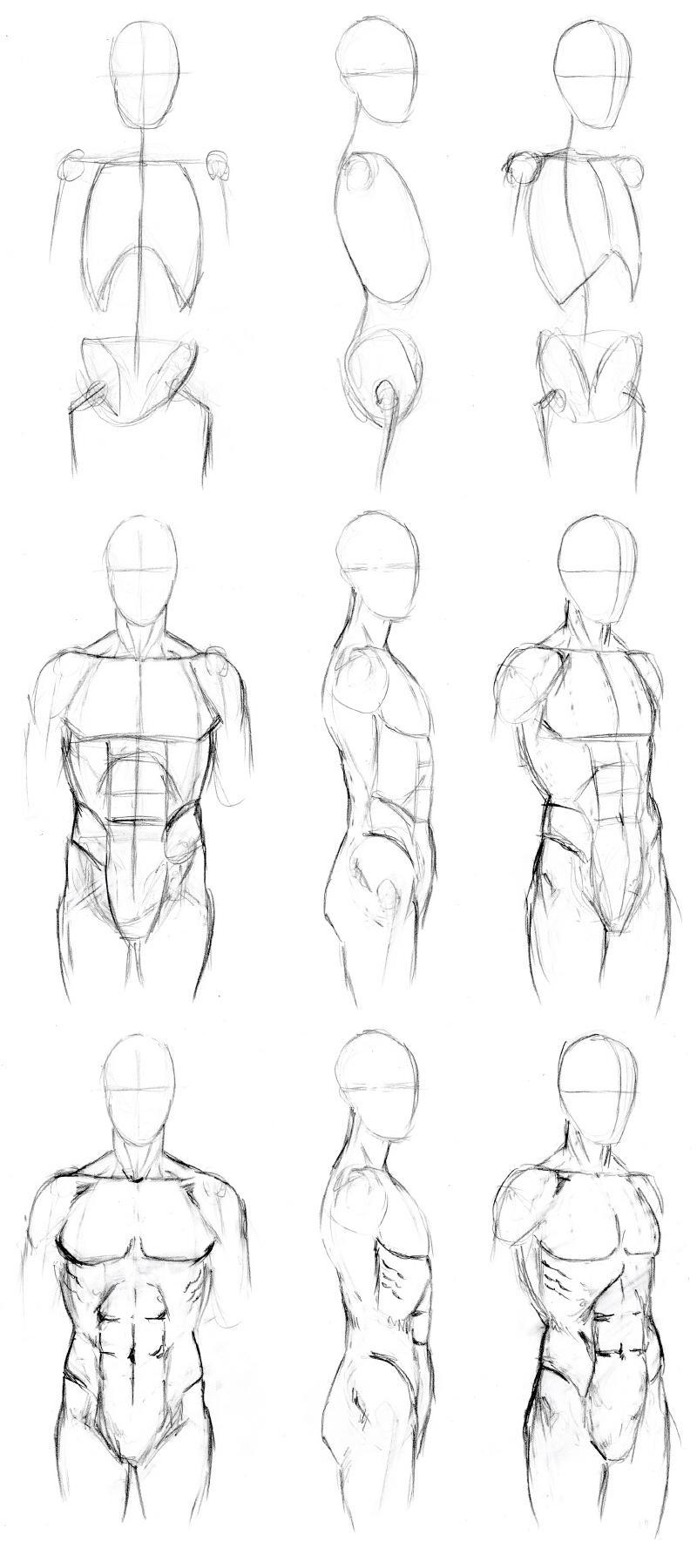 man body drawing - 736×1656