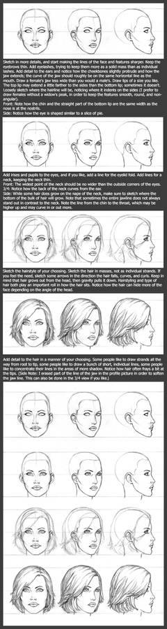Basic Head Tutorial: Female