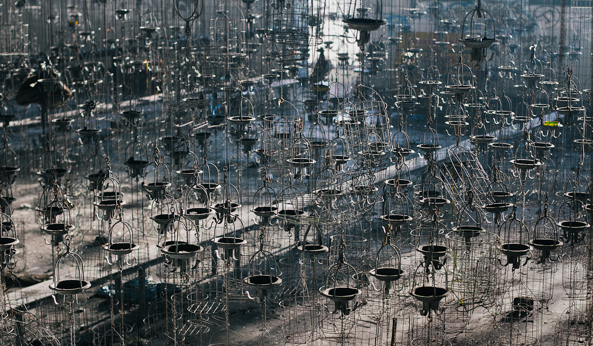 5k cages by schnotte