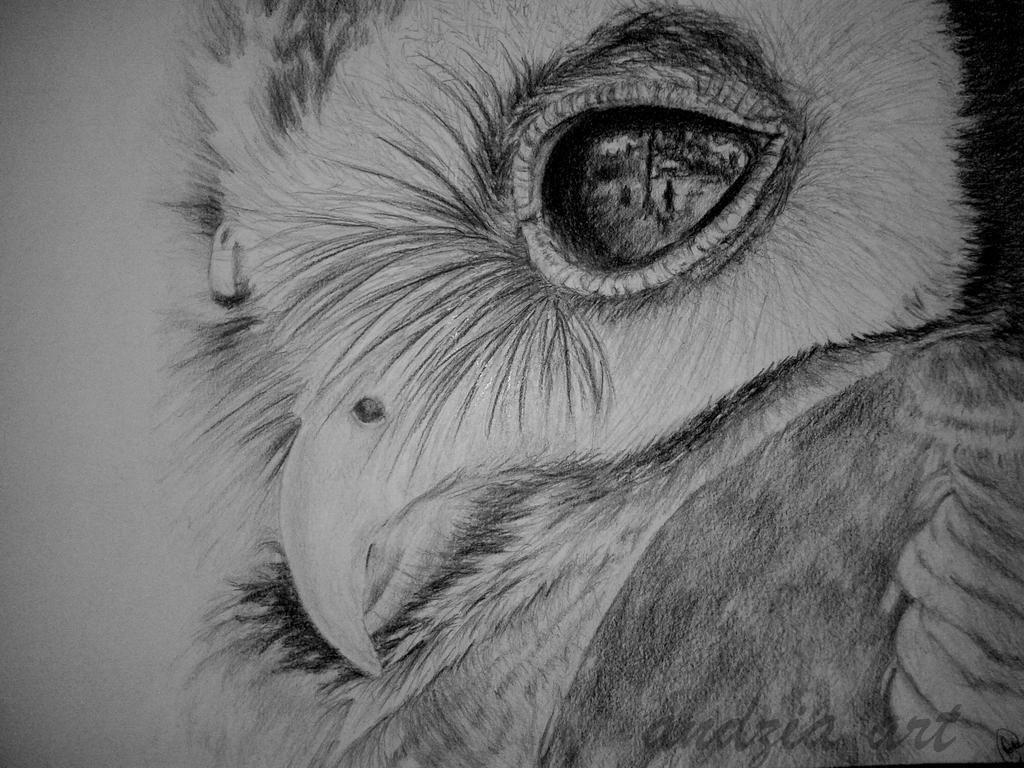 owl by Anna655
