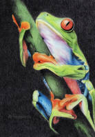 Frog by Anna655