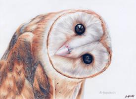 Super, cute owl by Anna655