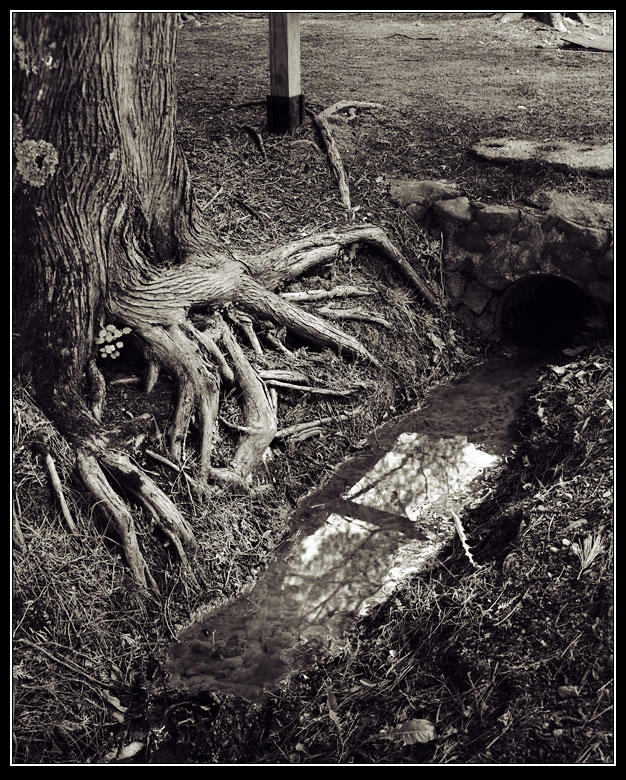 Roots Over Dirty Waters by six-something