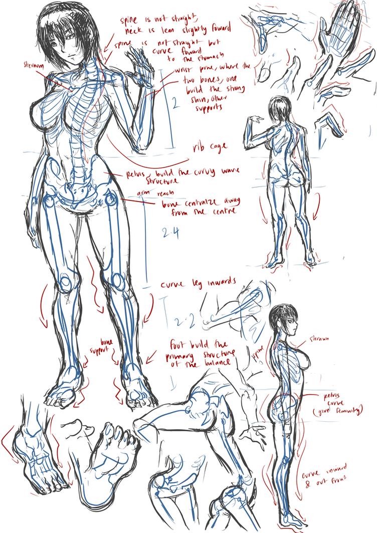 Female Anatomyskeleton By Frost7 On Deviantart