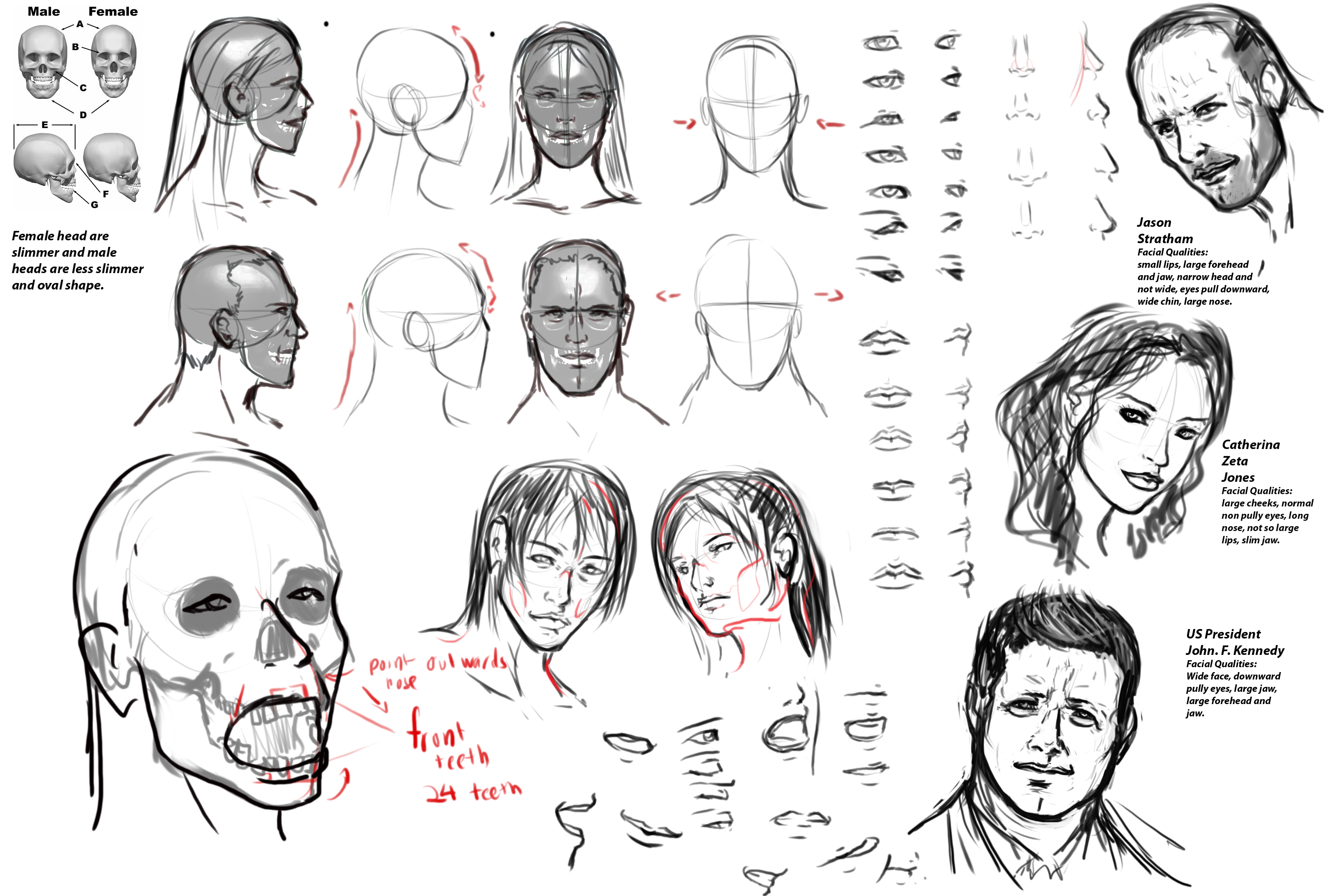 human head drawing reference