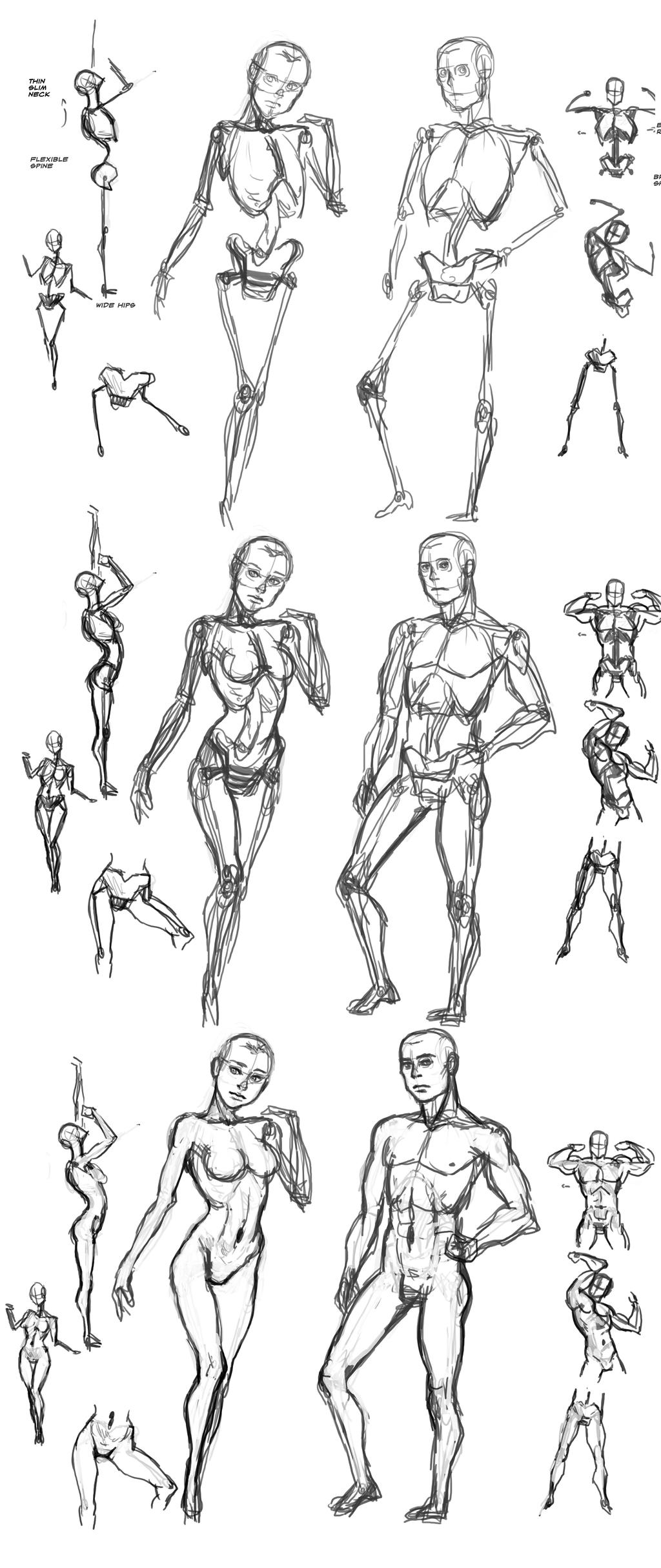 Female and Male Anatomy Comparison by Frost7 on DeviantArt