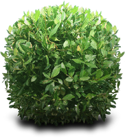 Shrub PNG by dbszabo1