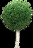 Garden Tree PNG by dbszabo1