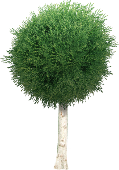 Garden Tree PNG by dbszabo1 on DeviantArt