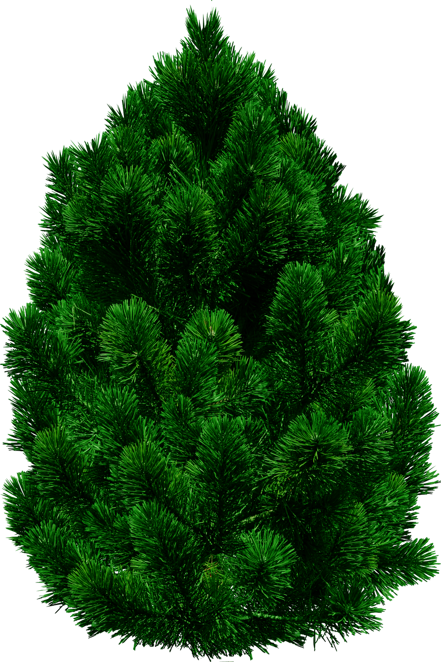Pine tree png by dbszabo1 on deviantart for Best small decorative trees
