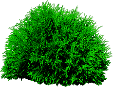 Bush or Tree PNG by dbszabo1