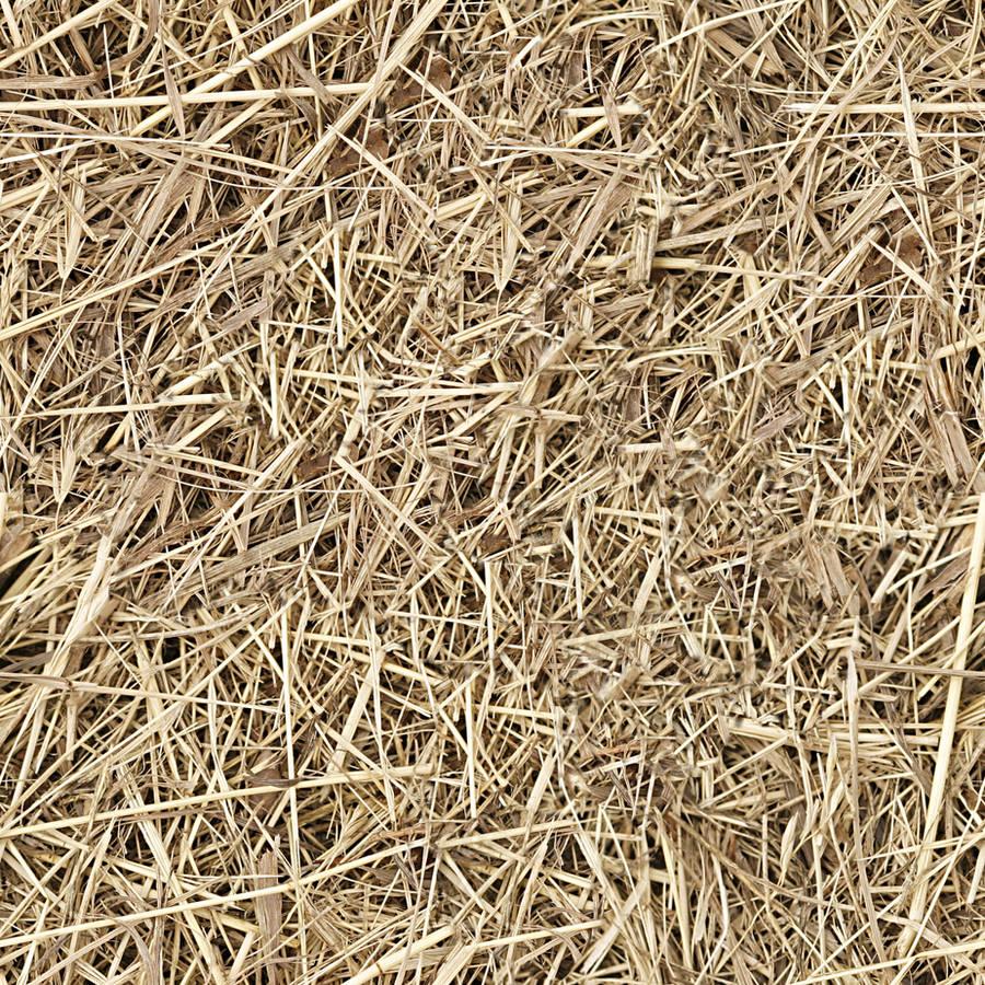 hay straw seamless texture by dbszabo1
