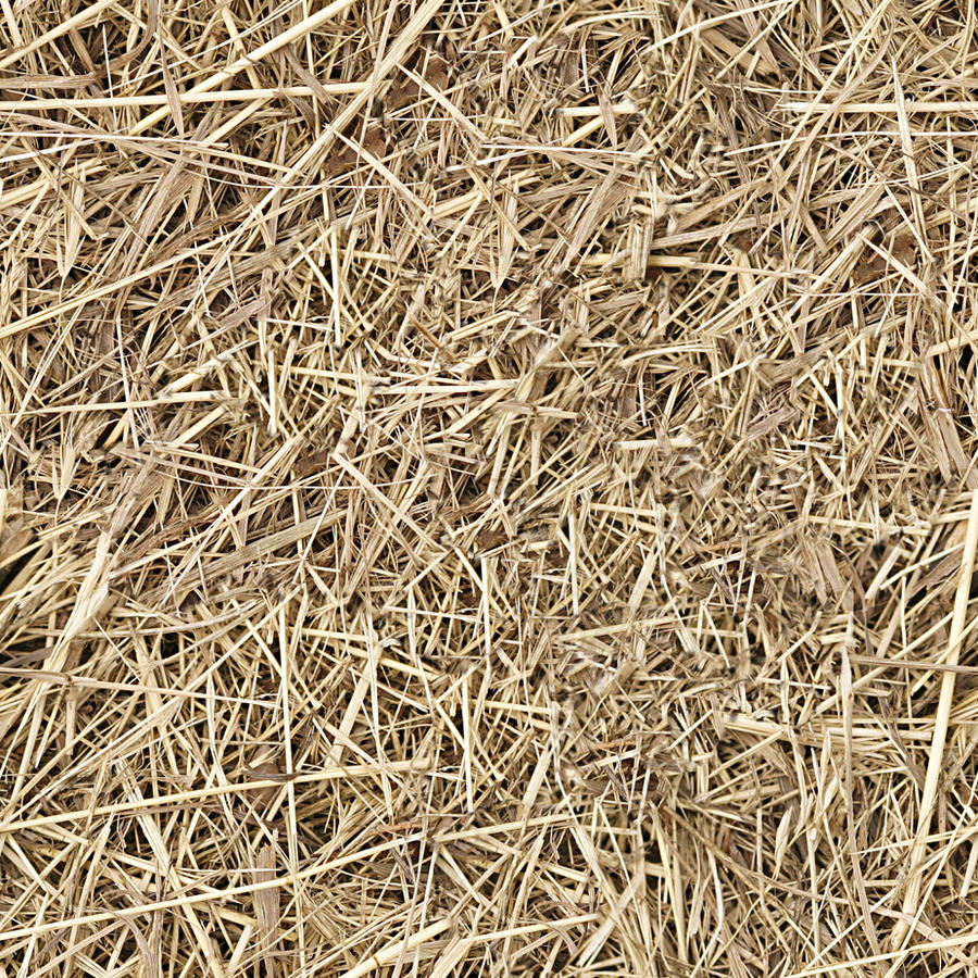 Hay Straw Seamless Texture By Dbszabo1 On Deviantart