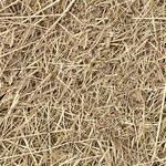 hay straw seamless texture
