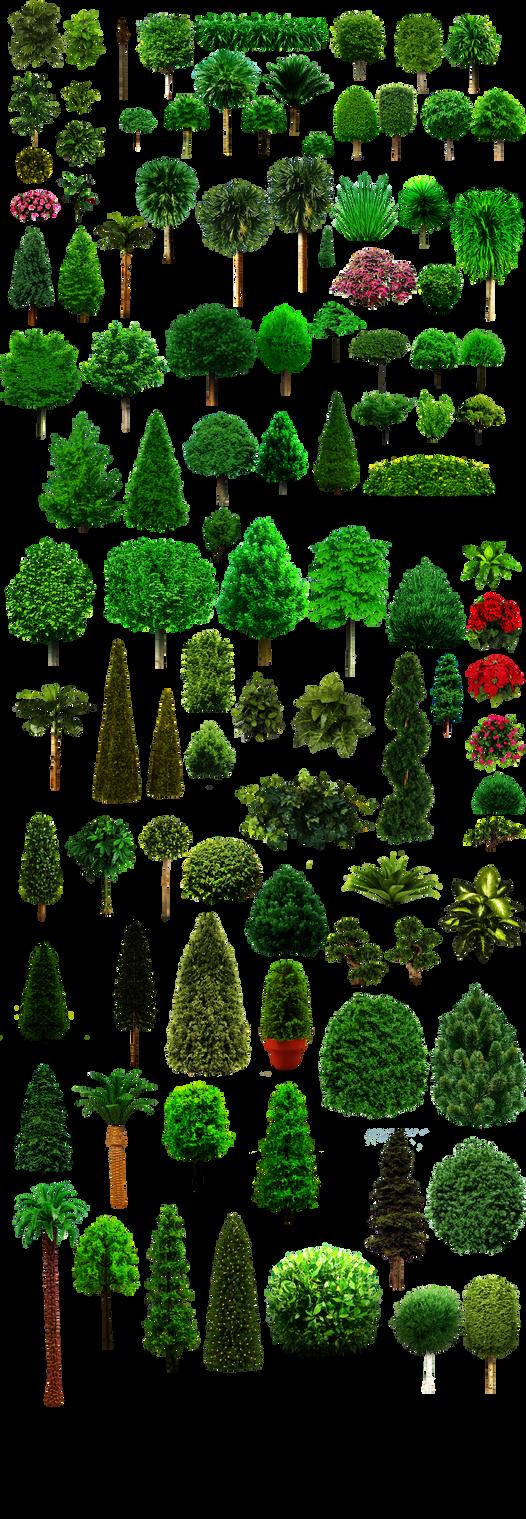 Colassal Mega Trees PNG 25MB by dbszabo1