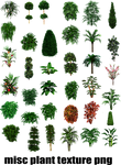 misc plant tree texture png