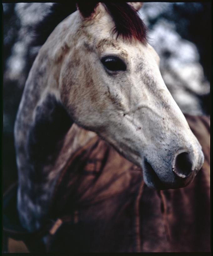 Jenna's horses VII. by Valdoo