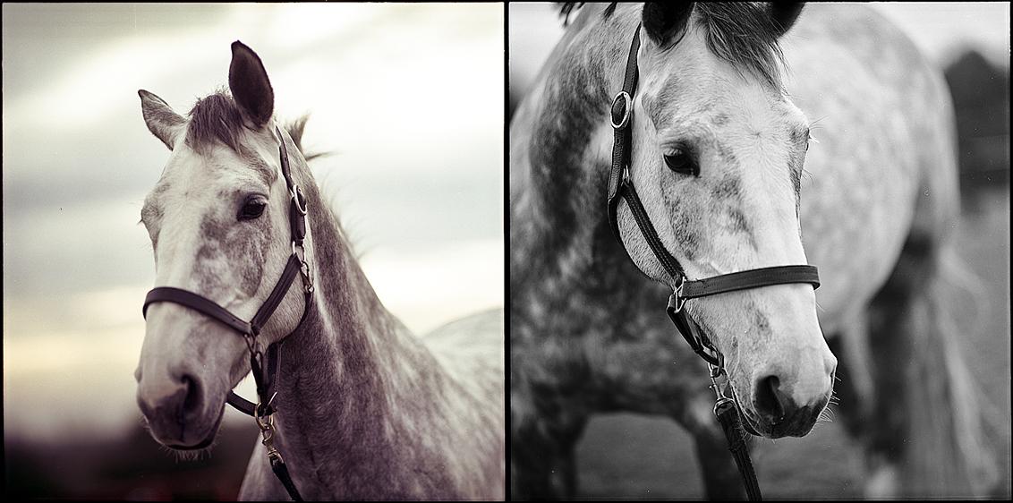 Jenna's horses VIII. by Valdoo