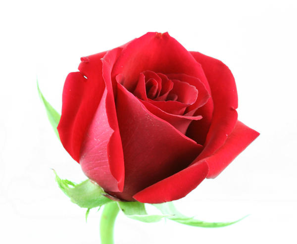 rose bud asian dating website Asiandatingcom is a specialist dating and matchmaking website that assists  people from asian and western backgrounds to find their perfect match we offer .
