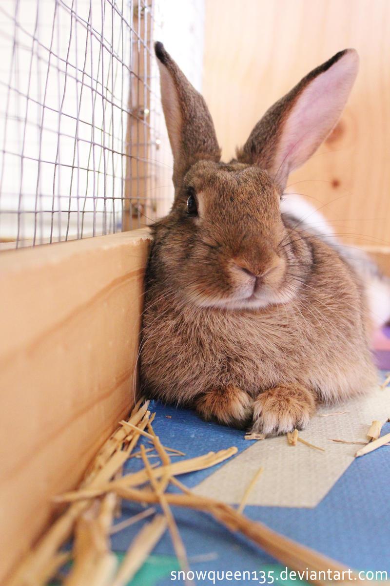 Rabbit by snowqueen135