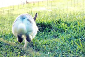 Hop, step, jump! by snowqueen135