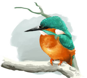 Kingfisher - Speedpaint by Aeyze