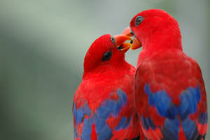 Parrot in love by wiltz