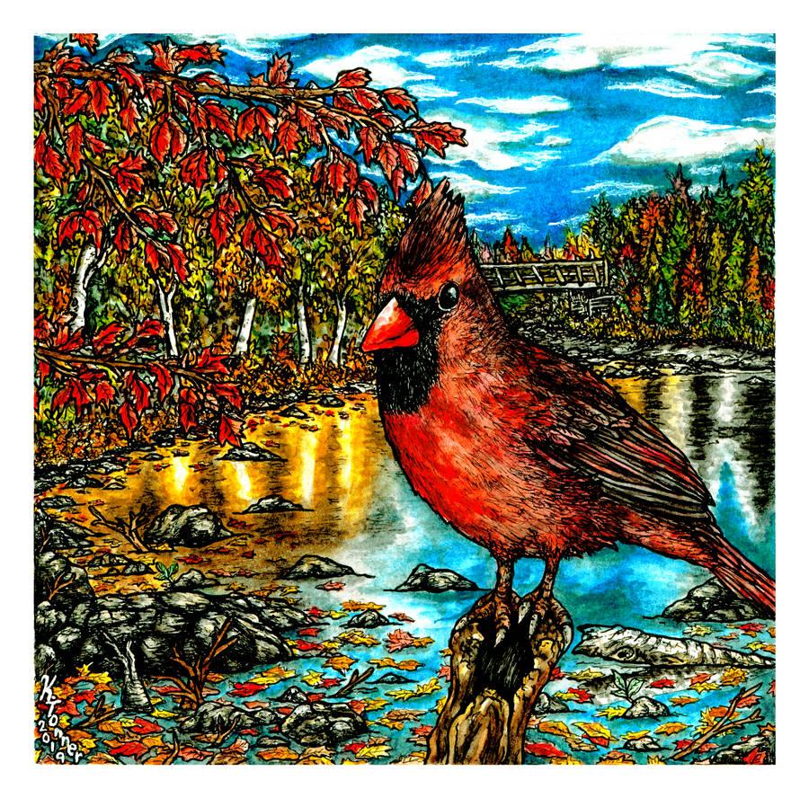 Cardinal by bundleofblues