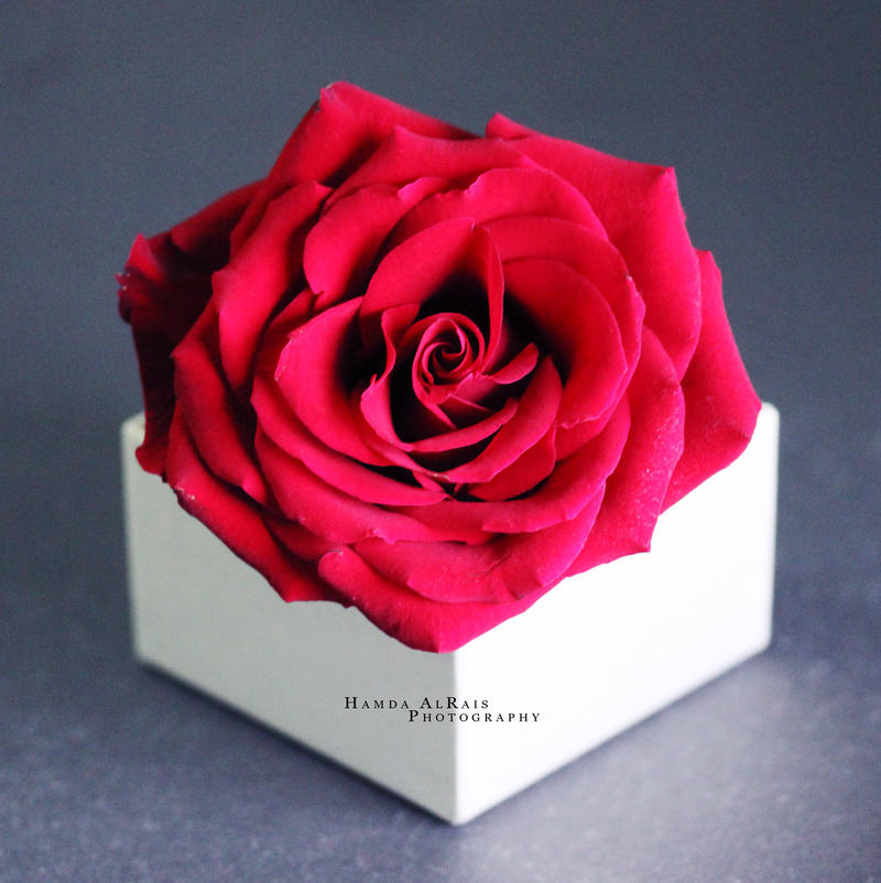 Rose Box by Hamda-AlRais