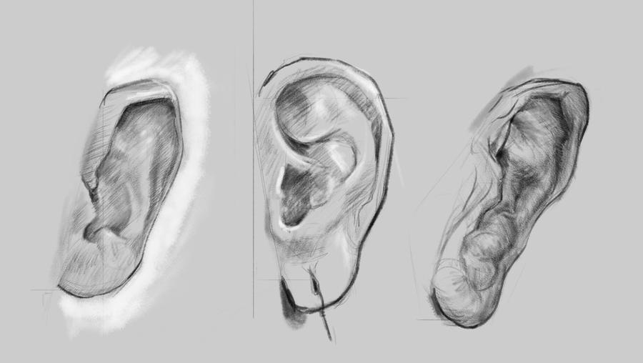 [Image: ear_sketching_by_josephhoward-dc2u3iy.jpg]