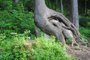 The Story of Trees and Stones