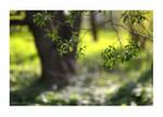 the freshness of May! by iliushka