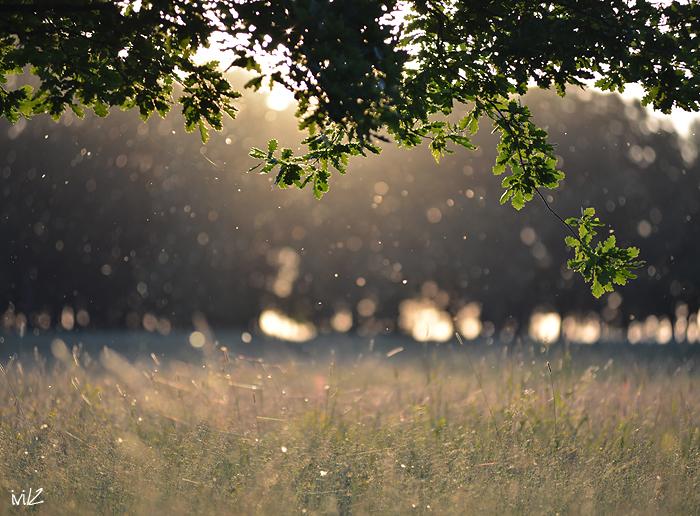 evening and warm... by iliushka