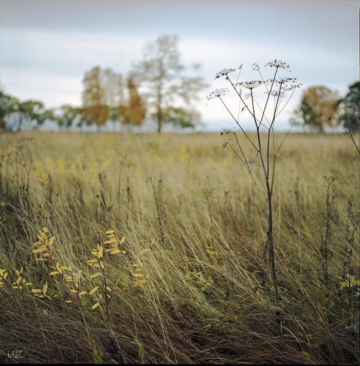 ...late fall by iliushka