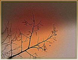 The last Leaves and Berries by surrealistic-gloom