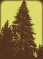 Gloomy Tree - 2 by surrealistic-gloom