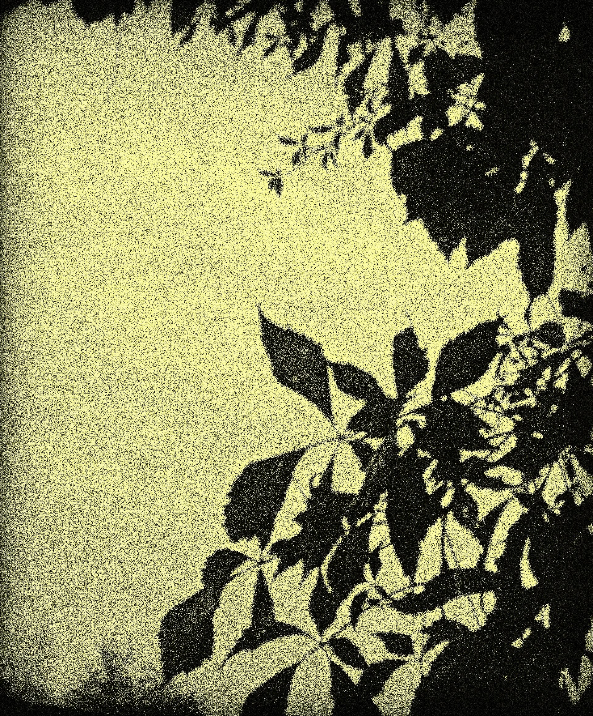 Gloomy Vine in Autumn by surrealistic-gloom