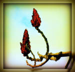 Spring Tree Buds by surrealistic-gloom