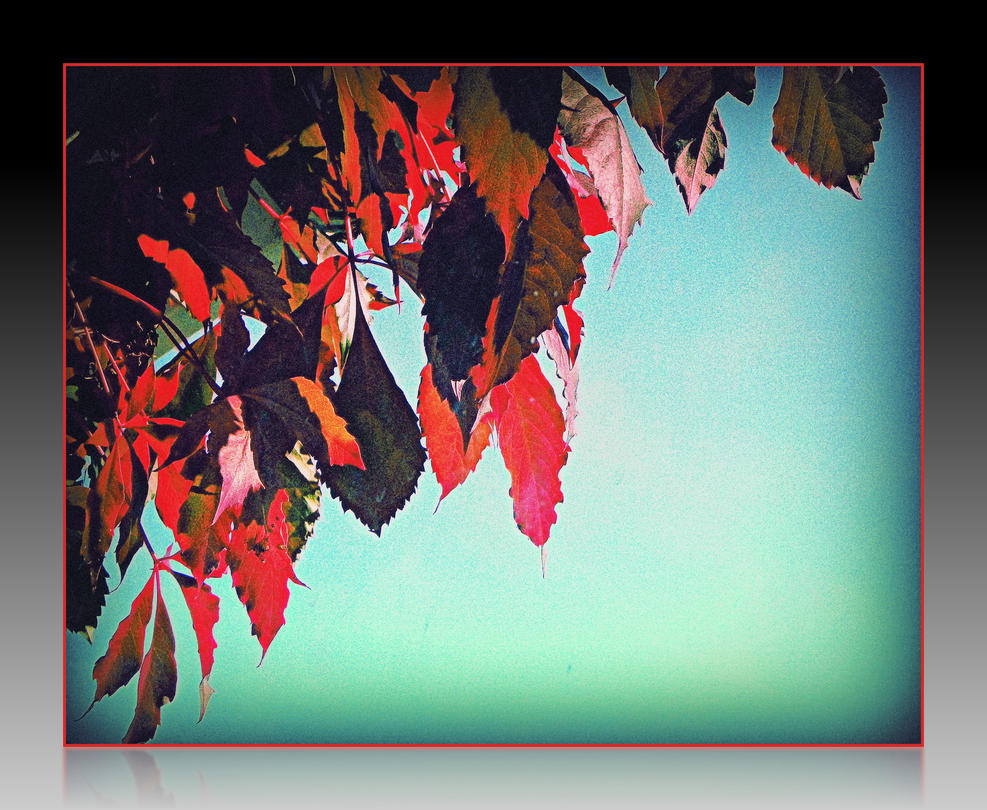 Weeping Leaves in Fall by surrealistic-gloom