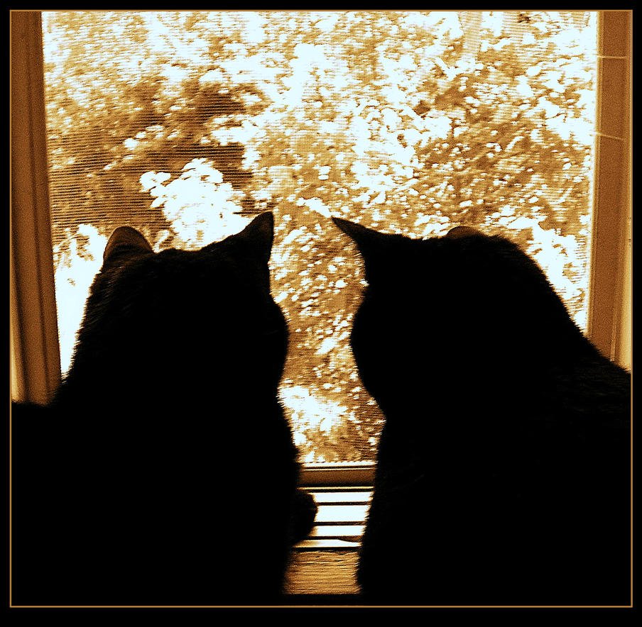Cats At The Window by surrealistic-gloom