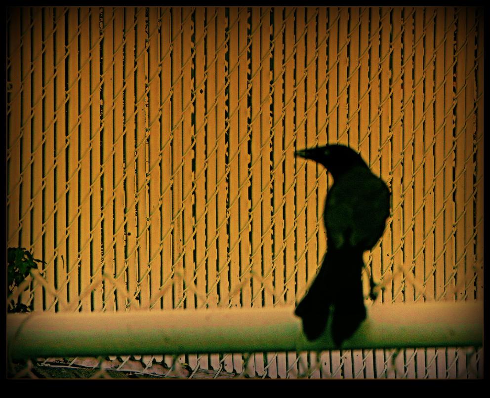 Shadow Of A Bird by surrealistic-gloom