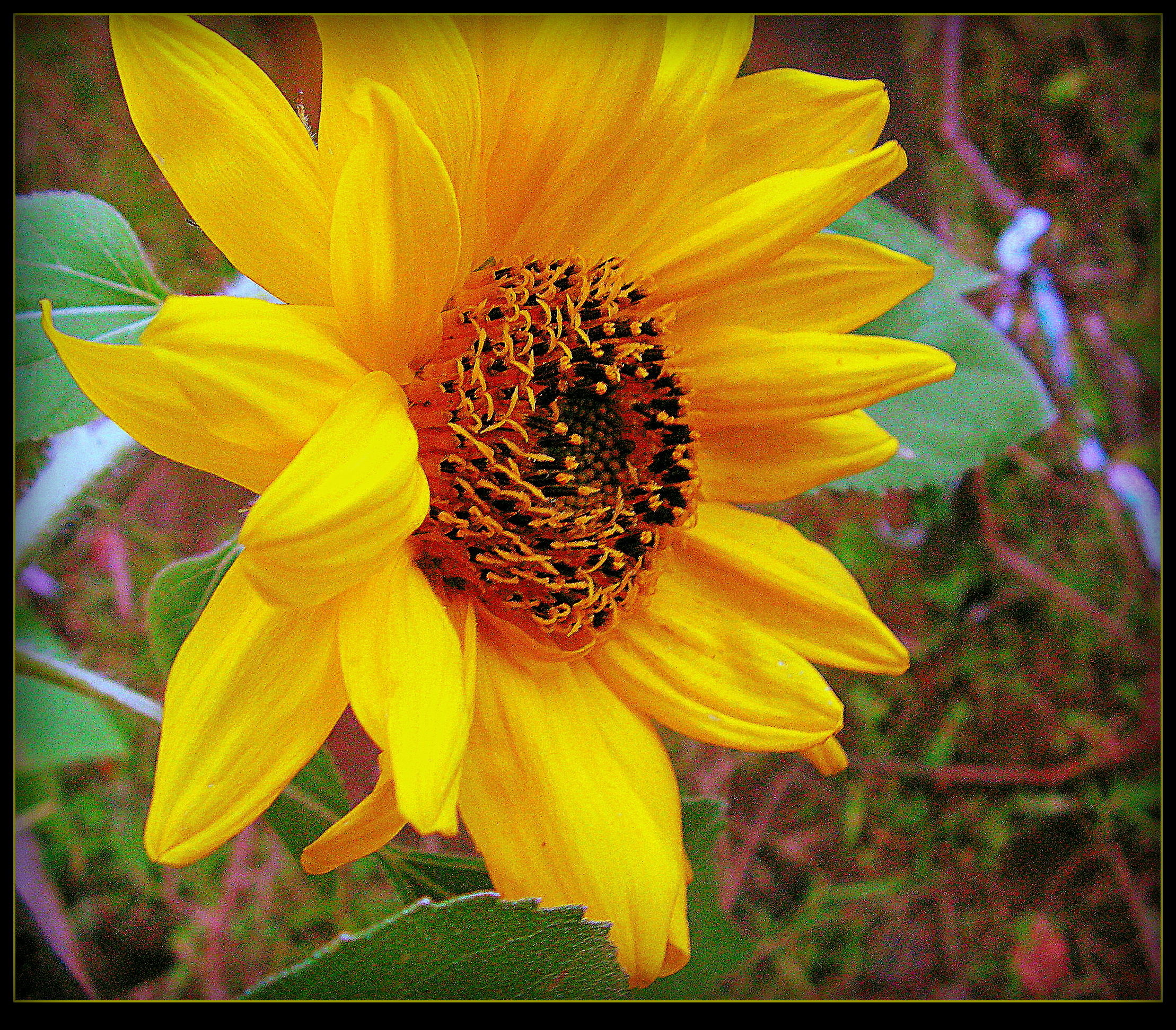Sunflower Near The Woods by surrealistic-gloom