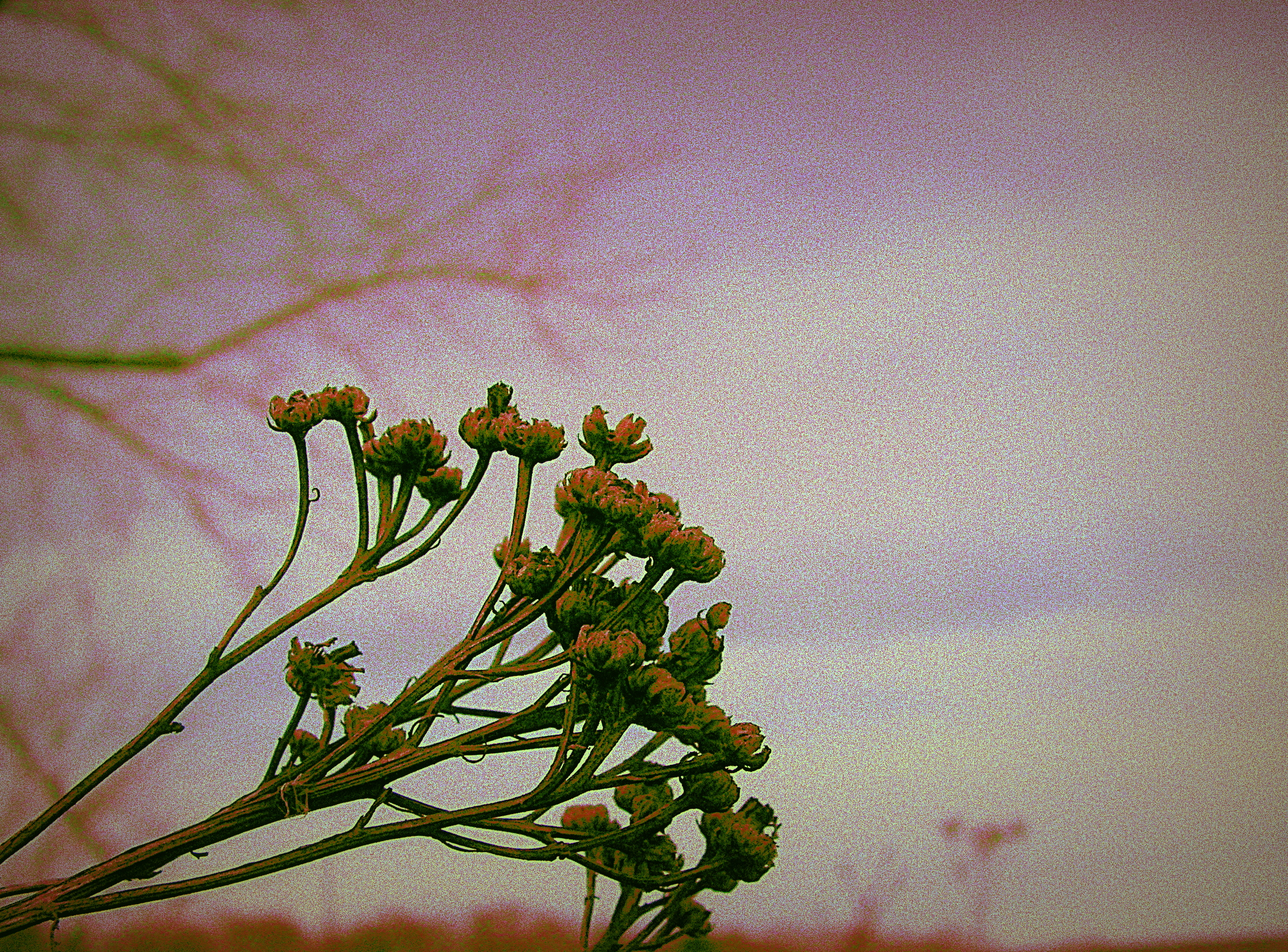 Dried Bush After Winter by surrealistic-gloom