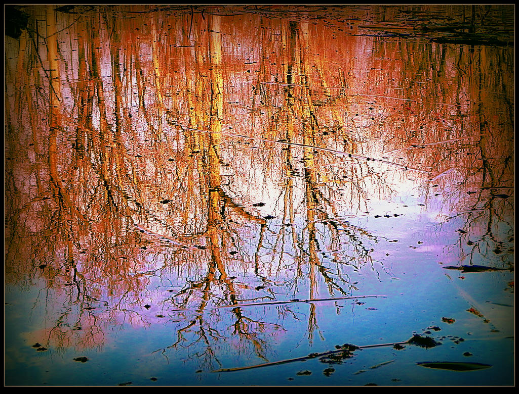 Reflected Trees In April by surrealistic-gloom