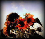 Sunflowers Decaying by surrealistic-gloom