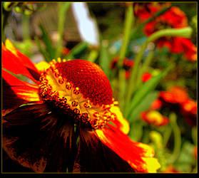 September Flower by surrealistic-gloom