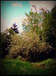 Flourished Apple Tree