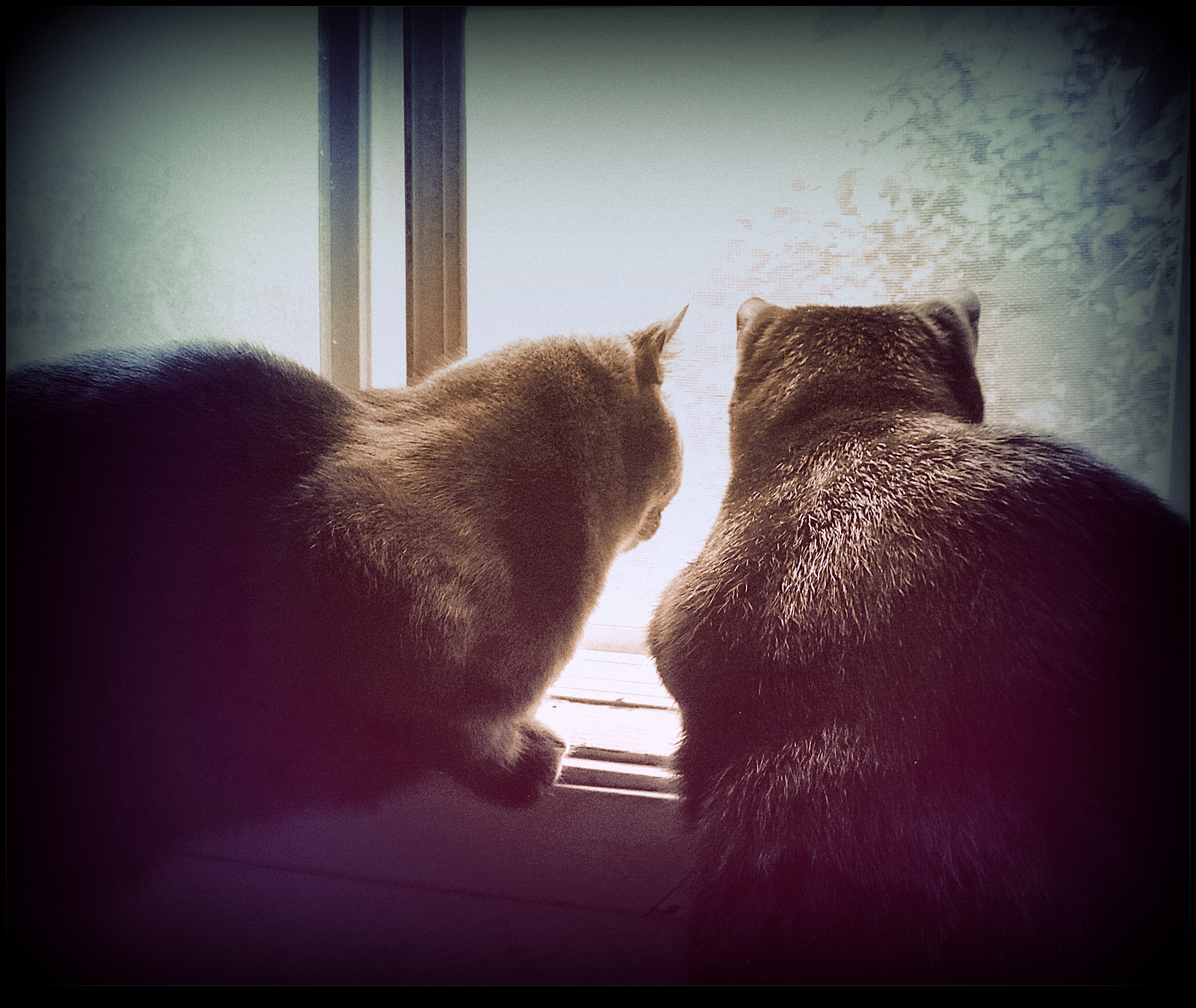 Cats at The Window  2 by surrealistic-gloom